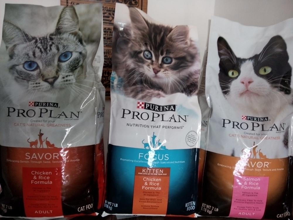 Cara Memberikan Makanan Kucing Persia agar Gemuk Maksimal